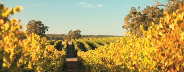 Vineyards at Frankland Estate in Western Australia
