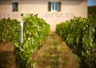 Get To Know the 10 Beaujolais Crus