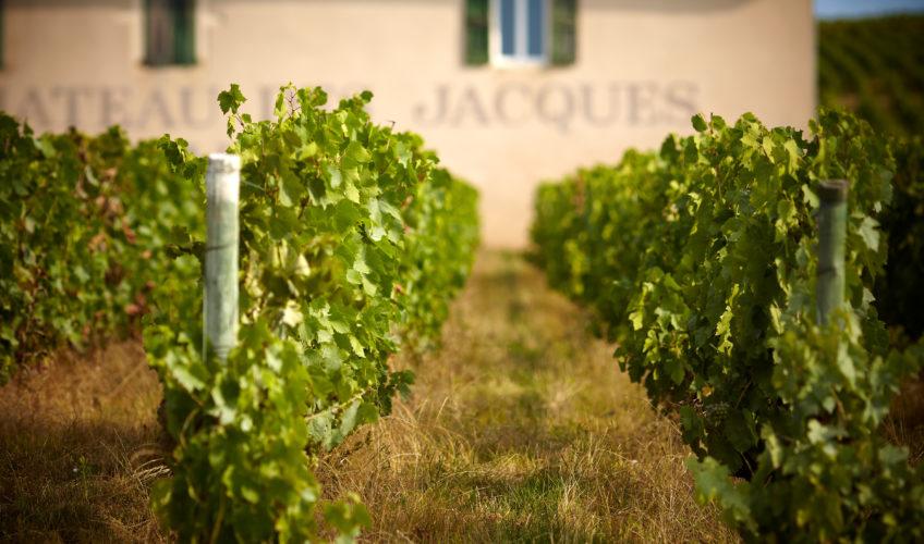 Get To Know the 10 Beaujolais Crus